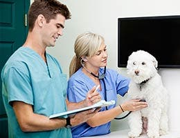 Job: Veterinary technologist or technician © Tyler Olson - Fotolia.com