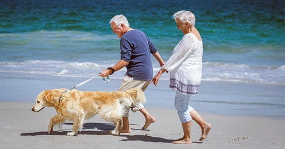 Man and woman walking golden retriever on the beach