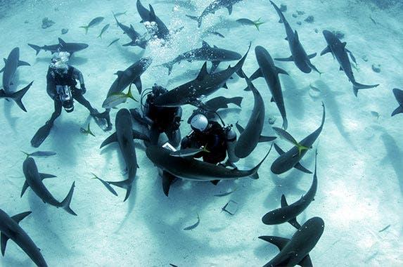 Bahamas shark-diving experience © Amanda Nicholls/Shutterstock.com