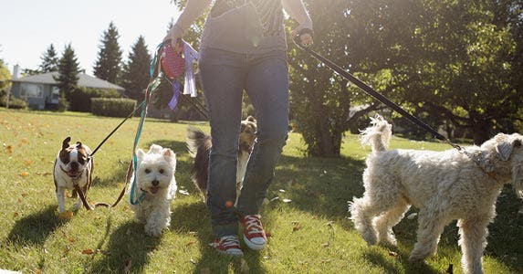 Dog walker | Joel Addams/Getty Images, Photo courtesy of Courtney McCormack