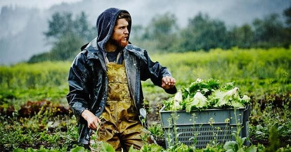 Man picking lettuce in farm | Thomas Barwick/Getty Images