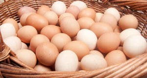 Eggs in one basket © Shutterstock.com