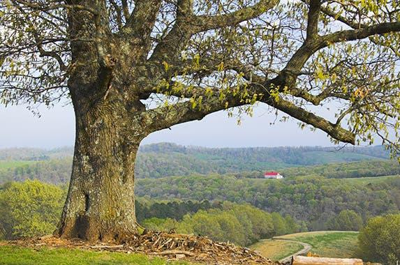 Arkansas © George Burba/Shutterstock.com