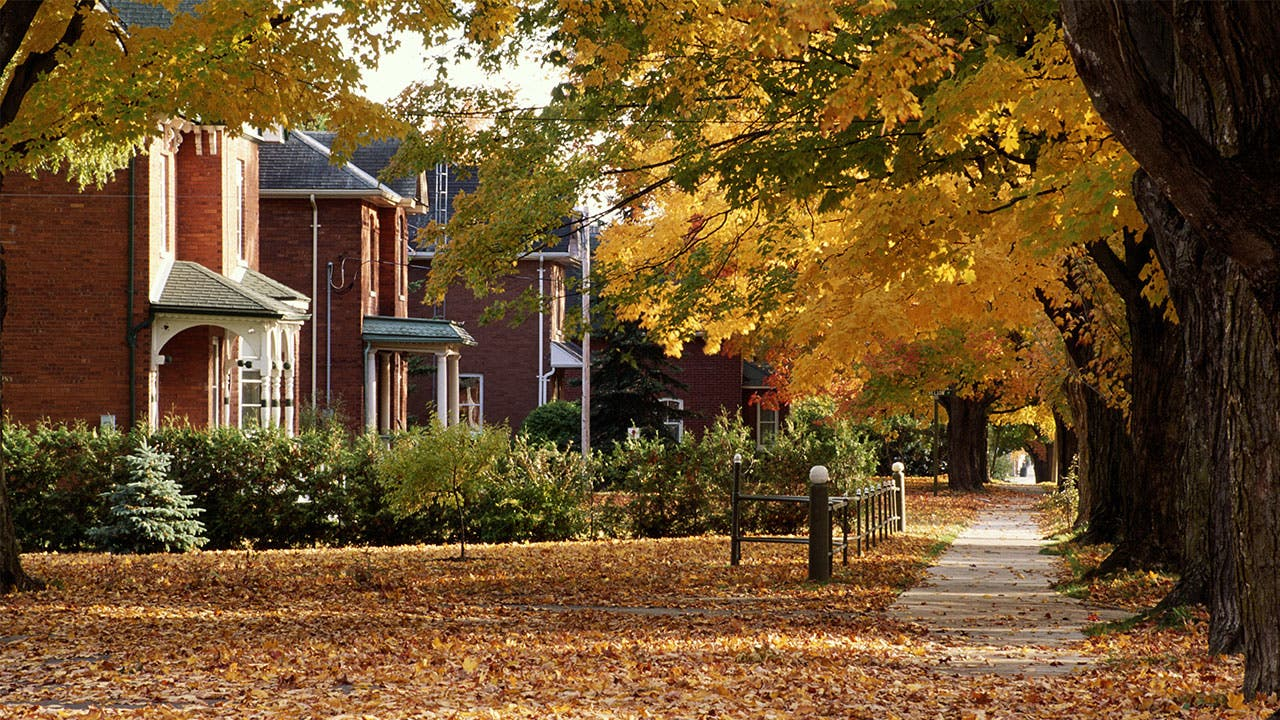 Fall leaves and brick houses