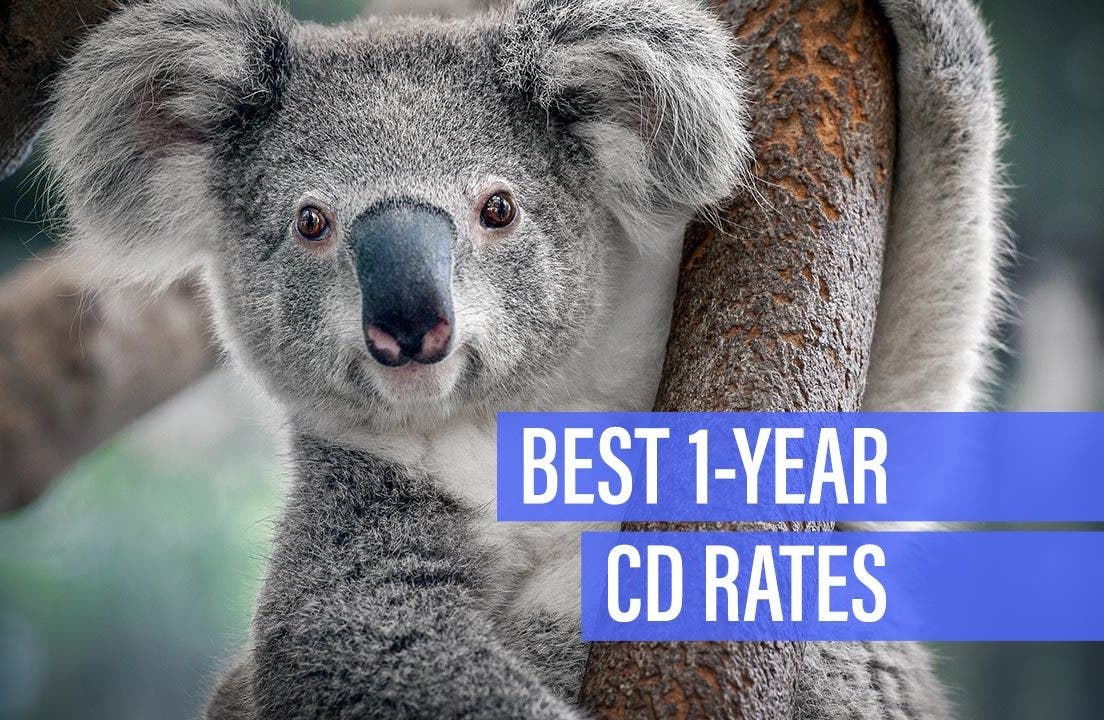 Best Cd Rates Credit Unions (Brain City)