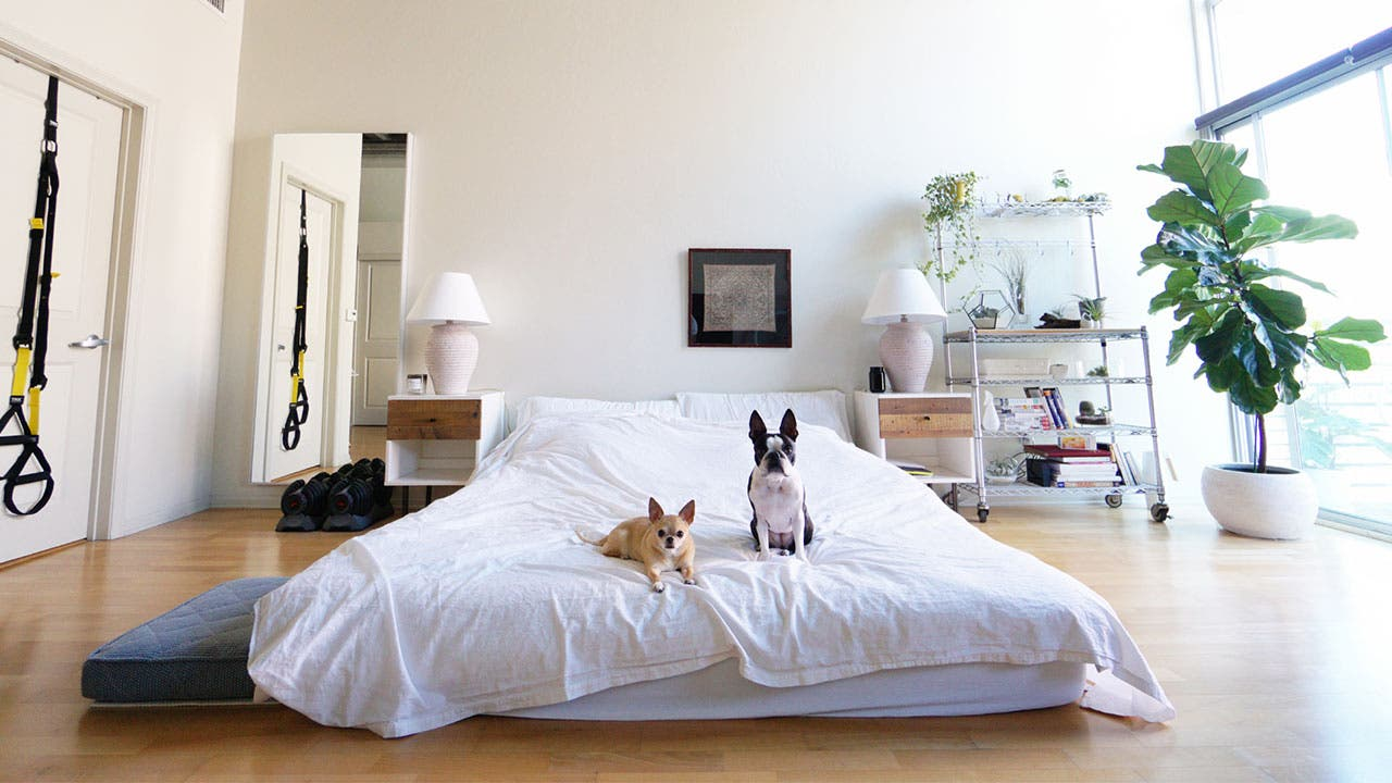Two little dogs looking at camera in bedroom