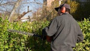 Landscaper pruning bush