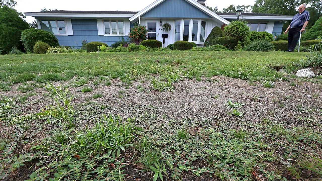 Dead grass front lawn