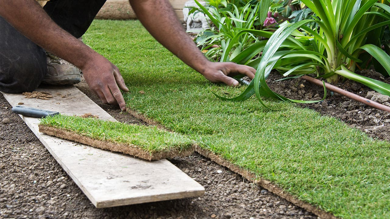 Landscaper laying grass