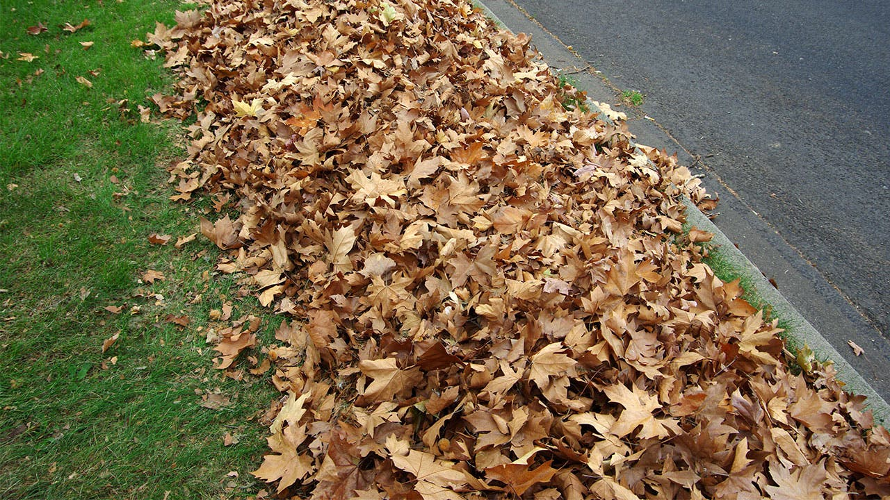 dead leaves on yard