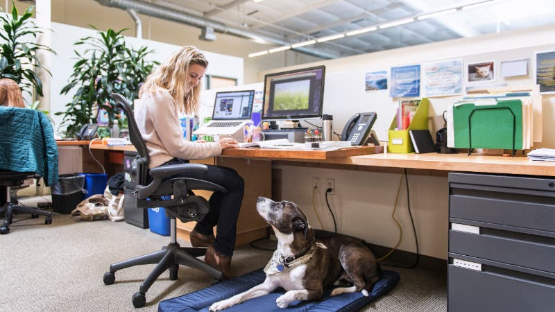 Woman working in office with dog