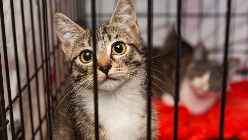 kittens in shelter for homeless animals