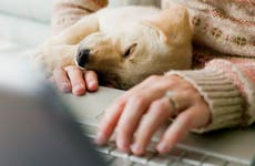 Woman using laptop with puppy