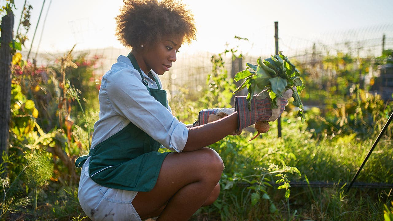 Best credit cards for home improvement and gardening