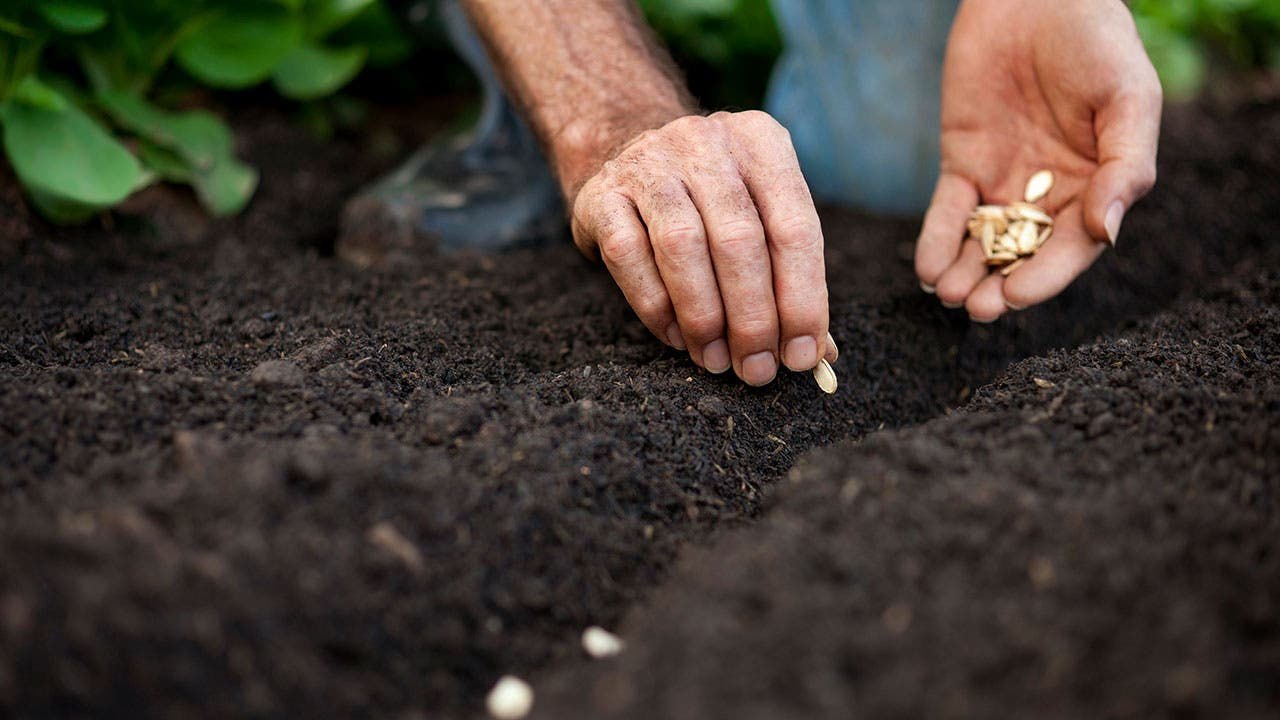 Man plants seeds