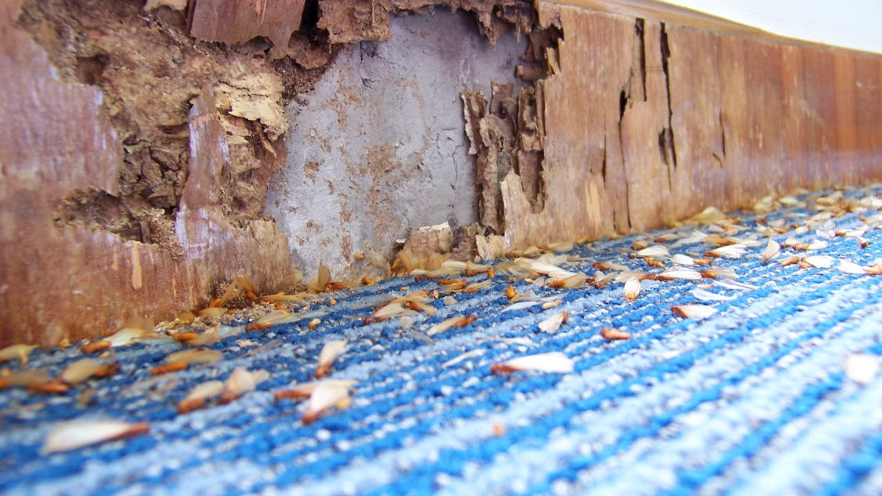 Wood destroyed by termites.