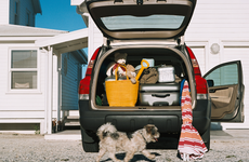 car with the trunk open, filled with luggage, and a dog walking by