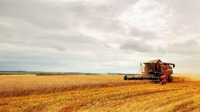 A combine harvest a field of grain