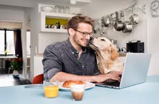 A man uses his laptop at home while a dog tries to lick him