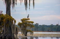 Scenic view of the bayou of Louisiana with Spanish moss draping from the branches of trees over the green march against a setting sun. There is a crane standing perched upon a branch in the distance.
