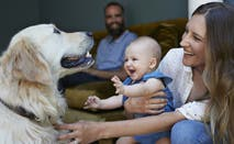 A family smiling as a mother holds her baby up to introduce them to the family dog; a smiling golden retriever.