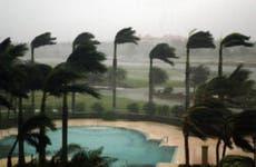 Palm trees in fierce wind.